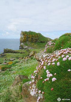 flowers and plants lunga island scotland #puffins