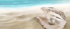 pearl beach, Shell Beach, Beach, Background image