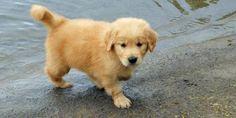 i love fluffy puppies :)