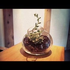 Organic Terrarium Blown Glass, Recycled Glass Terrarium, Blooming Cacti Terrarium, Desktop Terrarium
