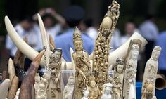 Smuggled ivory carvings. An environmental group says it has found loopholes that make Japan a weak link in efforts to curb a resurgence in the illicit trade in ivory.
