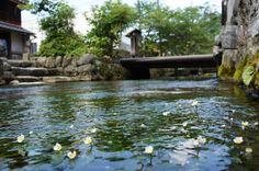 地蔵川(梅花藻) | 長浜・米原・奥びわ湖を楽しむ観光情報サイト
