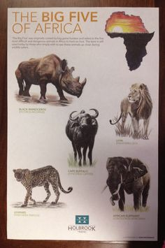 Africa's Big 5 Game Animals