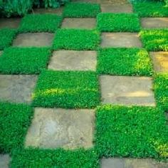 I would love this....I would be jumping around in shoes on the stone and barefoot on the green :)