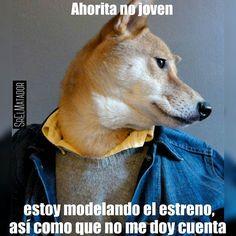 Ya listo con el estreno para la respectiva foto. . #ahoritanojoven #estreno #feliz2016 #moda #modelaje #modelo #ropa #perro #fashion #dog #fashiondog #ElSalvador #SrElMatador #SrElMatador http://www.srelmatador.com #Foto