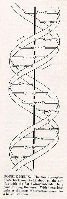 Dna Molecule Art Print Geometry Pinterest Biology Art