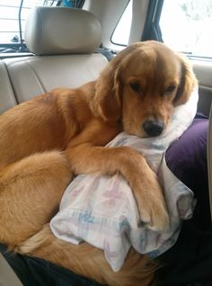 How he likes to ride in the car when we go on road trips! - Imgur