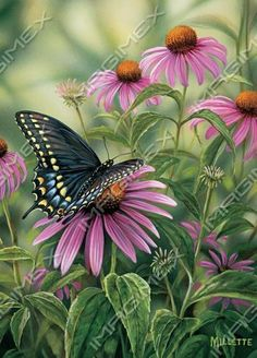 Butterfly by Rosemary Millette
