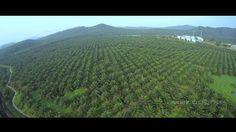 TBS Discovery Pro @ Palm Plantation