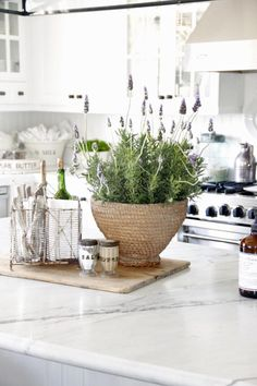 European kitchen with lavender plant and marble bench
