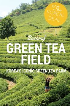 Take a trip to the iconic Boseong Green Tea Field in South Korea.
