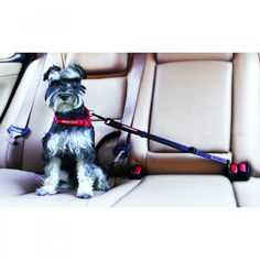 The Car Dog Seat Belt from Ezydog provides the perfect solution for safely…