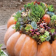 """Find the full story, """"Plant a Pumpkin"""" in Country Gardens, Fall 2014 in your Next Issue app. Digital Magazine, A Pumpkin, Pumpkin Decorating, Autumn Inspiration, Fall Recipes, Succulents, Planters, Home And Garden, Gardens"""