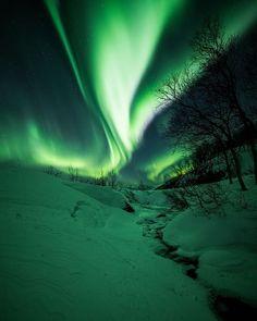 2,890 отметок «Нравится», 89 комментариев — Kim Jenssen (@kimjenssenphotography) в Instagram: «~ The beauty green line ~ . . #instagram #instagramhub #naturephotography #supreme_nightshots…»