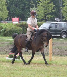 Dartmoor pony shows | Dartmoor-Ponies! - Seite 33