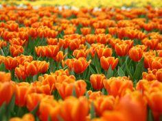 encuentra diferentes tipos de flores para tu día especial