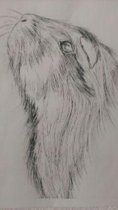 Beautifully drawn guinea pig!!!