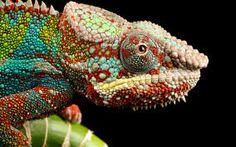 reptiles de colores - Buscar con Google