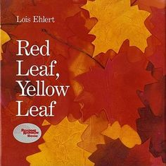 """""""Red Leaf, Yellow Leaf"""" - Lois Ehlert  (1991, Picture Books)"""