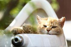 """16. August 2017: """"Auch eine Katze"""" Mehr Bilder auf: http://www.nachrichten.at/nachrichten/fotogalerien/weihbolds_fotoblog/ (Foto: Weihbold)"""