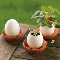 Strawberry plants in eggshell planters. So. Adorable. #Gardening