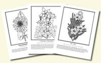 Free coloring pages for wildflowers and noxious weeds