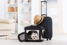 What You Must Know Before Traveling With Pets | http://www.hispanaglobal.net/what-you-must-know-before-traveling-with-pets/