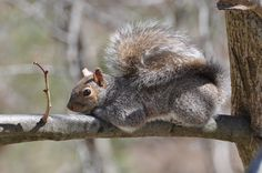 Grey Squirrel Lake linganore