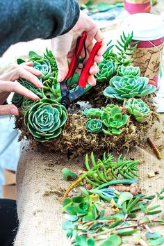 With nearly endless options for color, pattern, and texture, succulent wreaths are the perfect choice for decorative DIY gardens, no matter what your style.