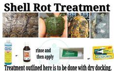 Shell rot treatment for turtles/tortoises