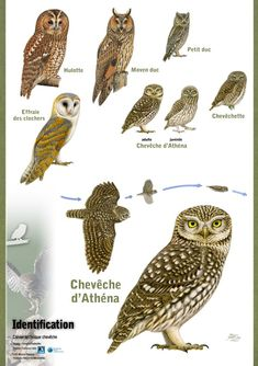 Raptors, Bird Kite, Animals And Pets, Cute Animals, Photo Animaliere, Garden Online, Post Animal, How To Attract Hummingbirds, Kinds Of Birds