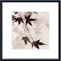 Alan Blaustein 'Japanese Maple Leaves No. 1' Metal Framed Art