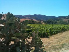 Alma Rosa Winery and Vineyards, Santa Barbara Wine Country