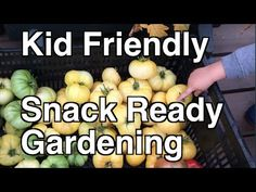 Kid Friendly Snack Ready gardening will inspire our kids to love gardening and have a healthy respect for our food. Find out how simple it is to inspire the next generation! Diy Garden Projects, Garden Ideas, Eva Gabor, Organic Seeds, Secret Gardens, Organic Gardening Tips, Hobby Farms, Hungry Caterpillar, Edible Garden