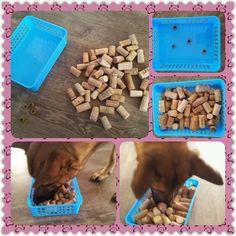 Thinking games for your dog   Denkspellenvoorjehond.jouwweb.nl