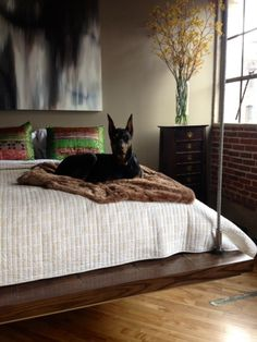 . favorit place, cat, dogs, beds, justin timberlake, favorit thing, loft spaces, bricks, bedrooms