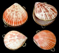 Enjoy the Florida lifestyle and experience coastal beach decor.  Rare seashells.  Mermaid novelty gifts.   Autism and Cancer Awareness jewelry.  Abalone jewelry.   Fairy garden collector.