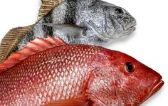 What's your favorite fish? Louisiana's waters are packed with tasty fish that are always super fresh. Learn about the fishing seasons in Louisiana and pick up some awesome recipes. #fish #louisiana #seafood