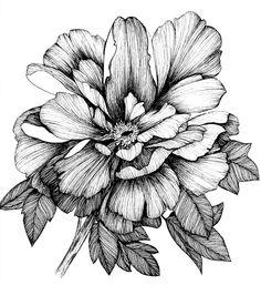 Draw on behance botanical drawings, botanical prints, botanical flowers, tattoo apprenticeship, nature Pencil Drawings Of Flowers, Flower Tattoo Drawings, Pencil Shading, Flower Sketches, Flower Tattoos, Art Sketches, Art Drawings, Botanical Drawings, Botanical Prints