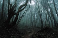 Aokigahara Forest, Japan - 'Suicide Forest', very haunted.