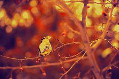 Фотография bird автор Olly levina на 500px