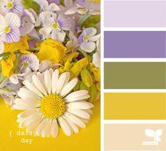 {Daisy Day} purple & yellow combo!