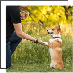 How to Stuff a Dog Kong Like a PRO — Stumps + Rumps Corgi Breeds, Joint Supplements For Dogs, Corgi Facts, Frozen Dog, Puppy Food, Dog Biscuits, Homemade Dog Treats, Dry Dog Food, Pembroke Welsh Corgi