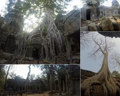 Temples of Angkor – The Girls Who Wander Angkor, The Girl Who, Temples, Cambodia, Wander, Girls, Plants, Little Girls, Daughters