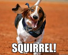 basset hound funny - Google Search