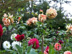Jane Cowl, Walter Hardisty and Hy Sockeye-Frances Palmer's garden
