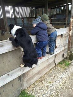 children with border collie