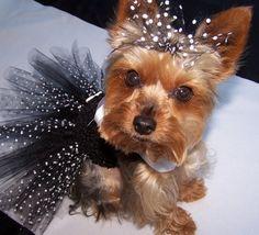 Dog TuTu dress. How Adorable!!!!