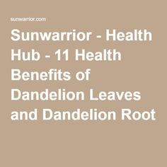 Sunwarrior - Health Hub - 11 Health Benefits of Dandelion Leaves and Dandelion Root