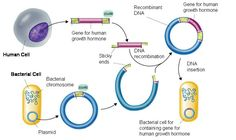 Process Of Recombinant DNA Technology (Genetic Engineering) « SimpleBiology